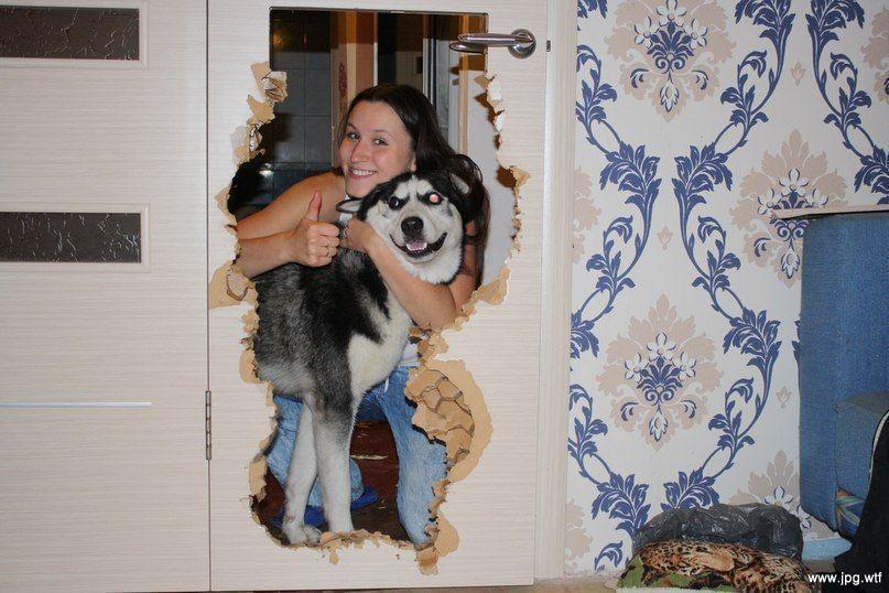 Какие породы собак нельзя держать в квартире