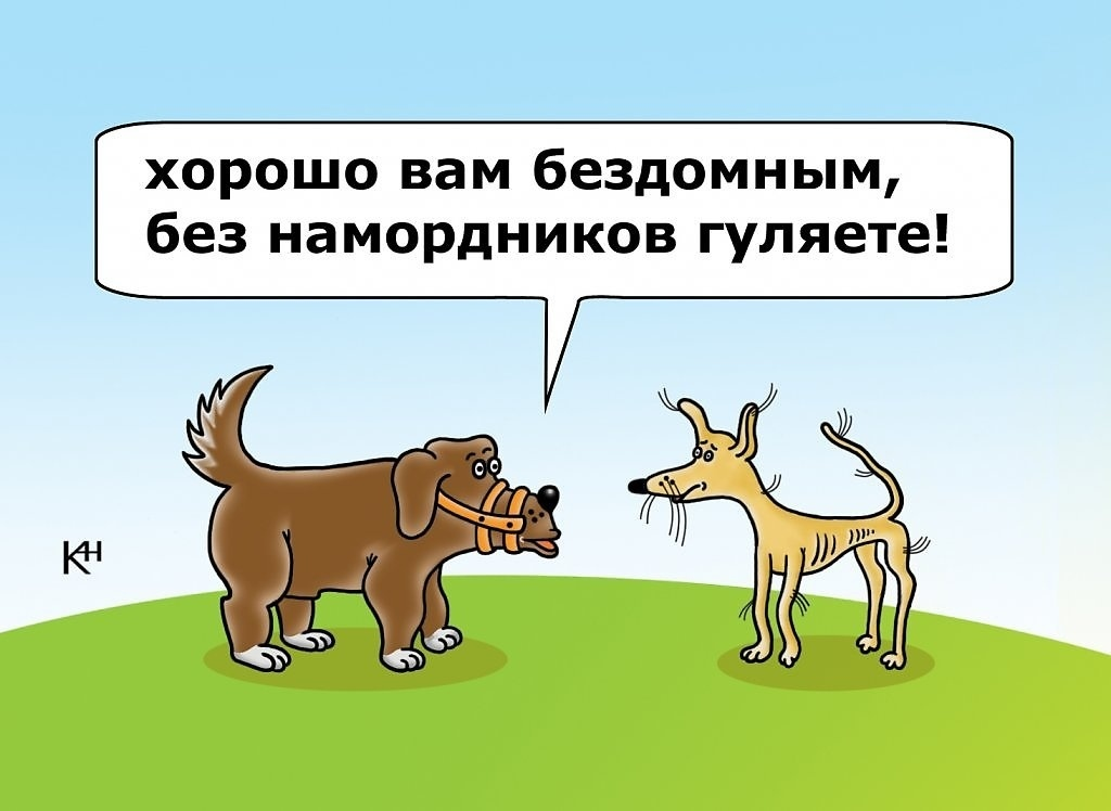 Анекдоты Про Животных Для Детей