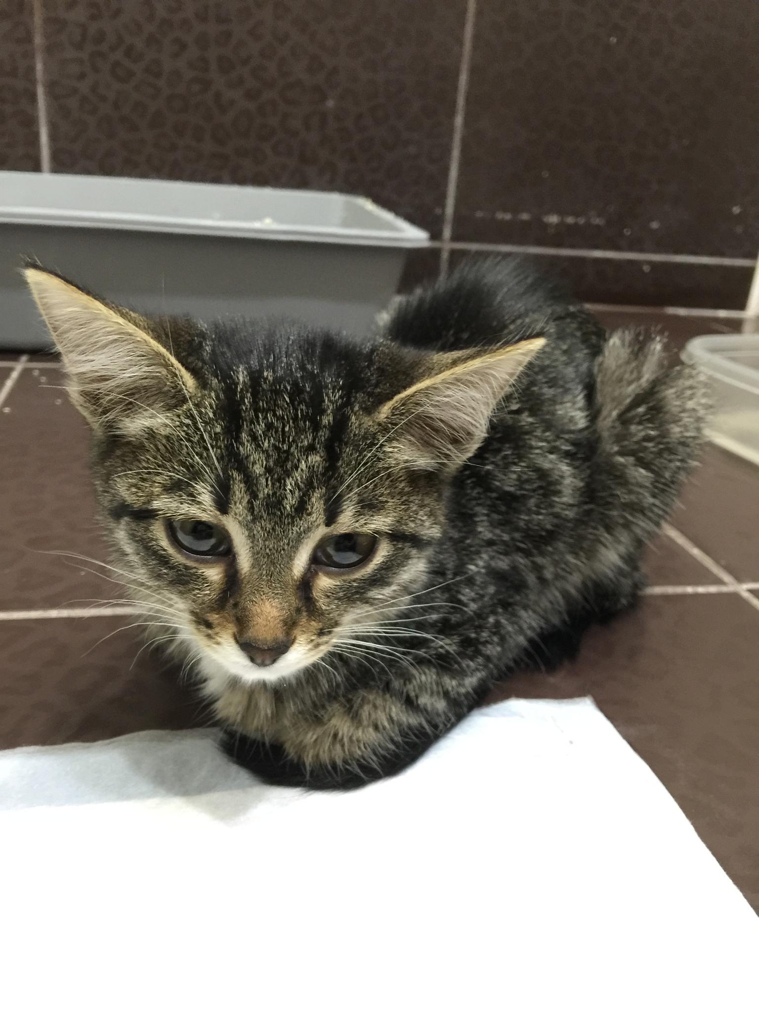 Кот не может пописать что делать в домашних условиях, первая помощь 883