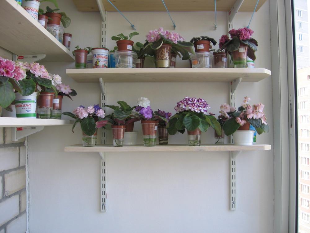 Фиалки. весна! цветём и пахнем! / форум.