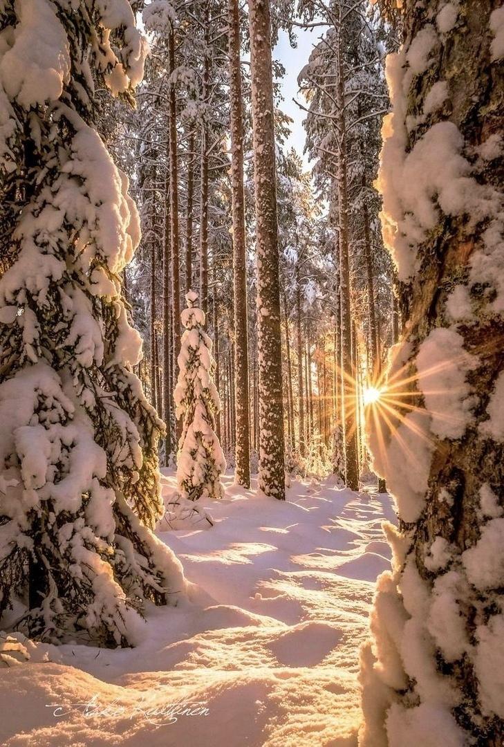 вертикальное фото красоты зимы ближайшие