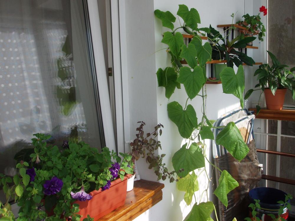 Что вырастить на балконе? / форум.