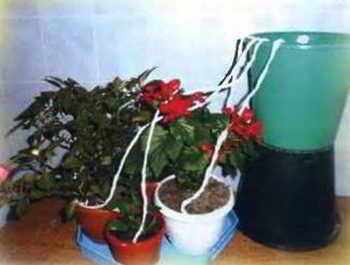 Как полить цветы во время отпуска