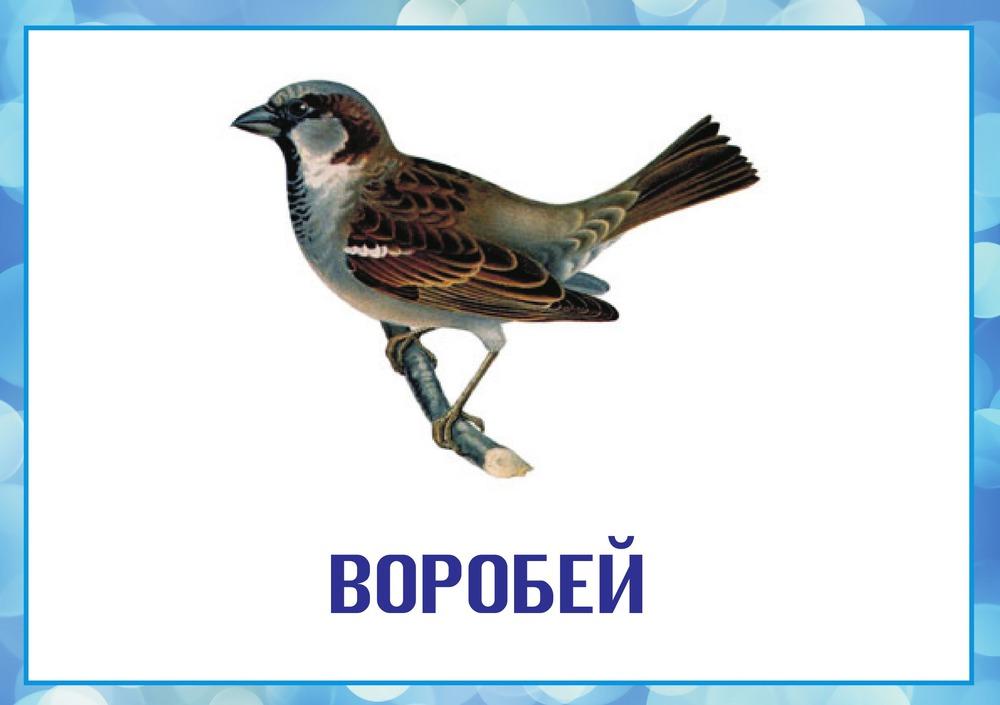 Зимующие птицы красивые картинки с названиями для детей