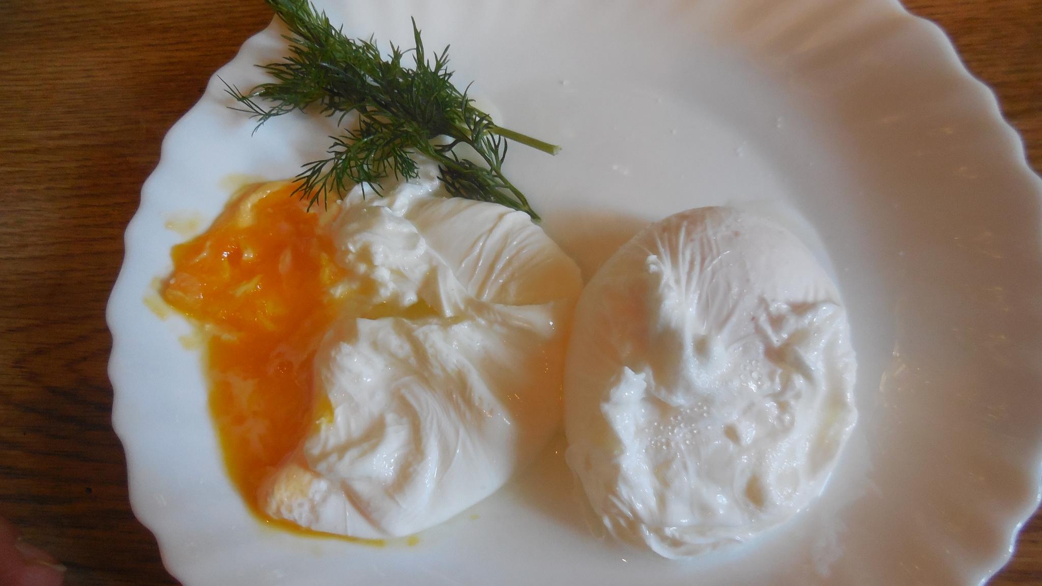 Какой сыр можно на диете магги