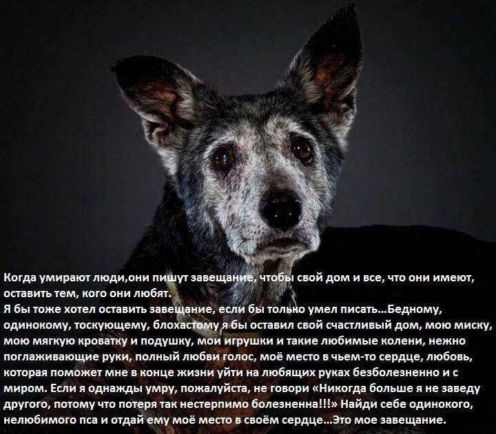 Собака умерла картинки