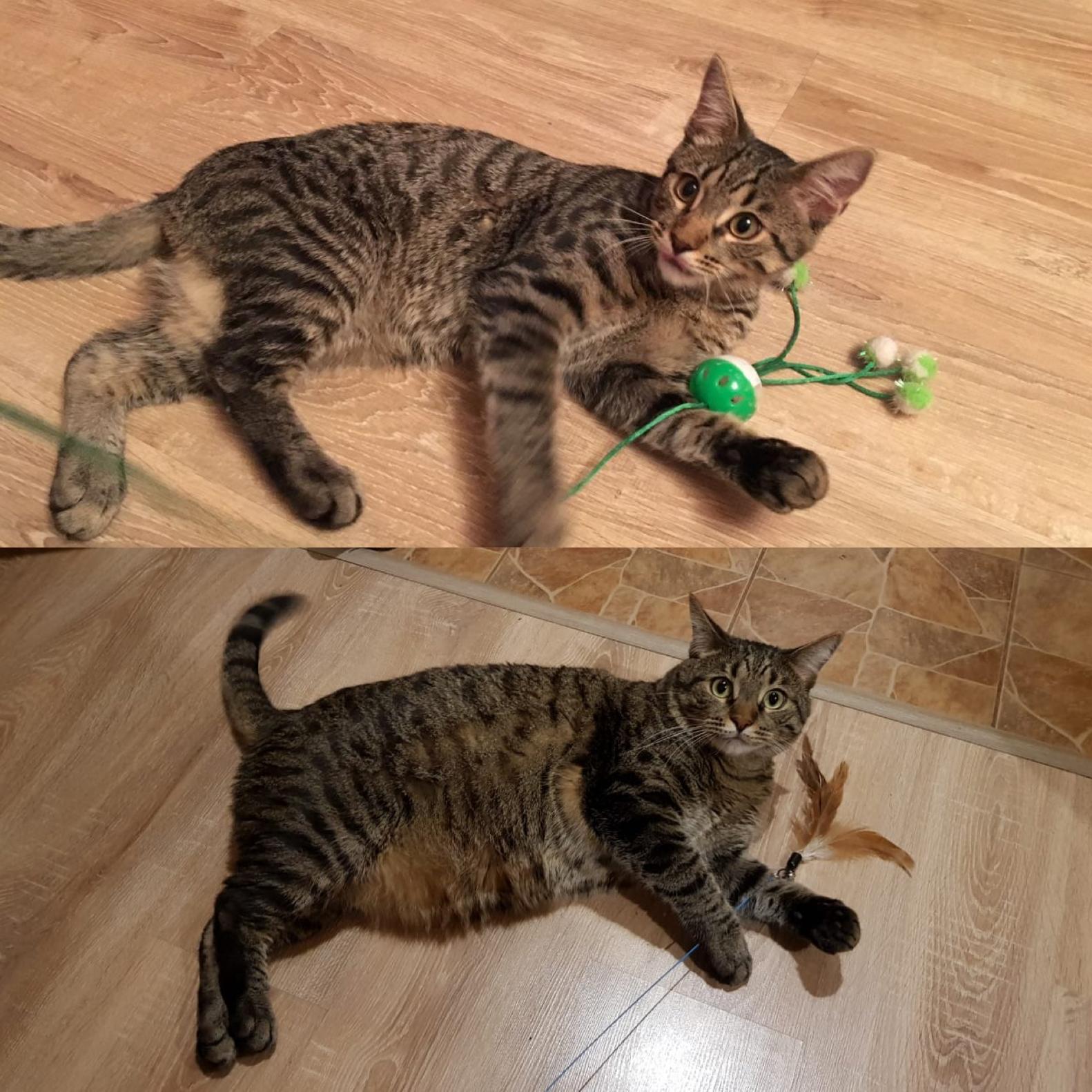 Как Домашним Кошкам Похудеть. Основные способы — как помочь похудеть кошке