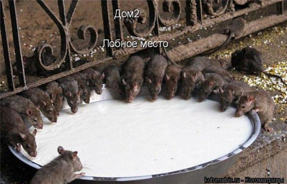 К пермячке в окно дома ломились крысы.