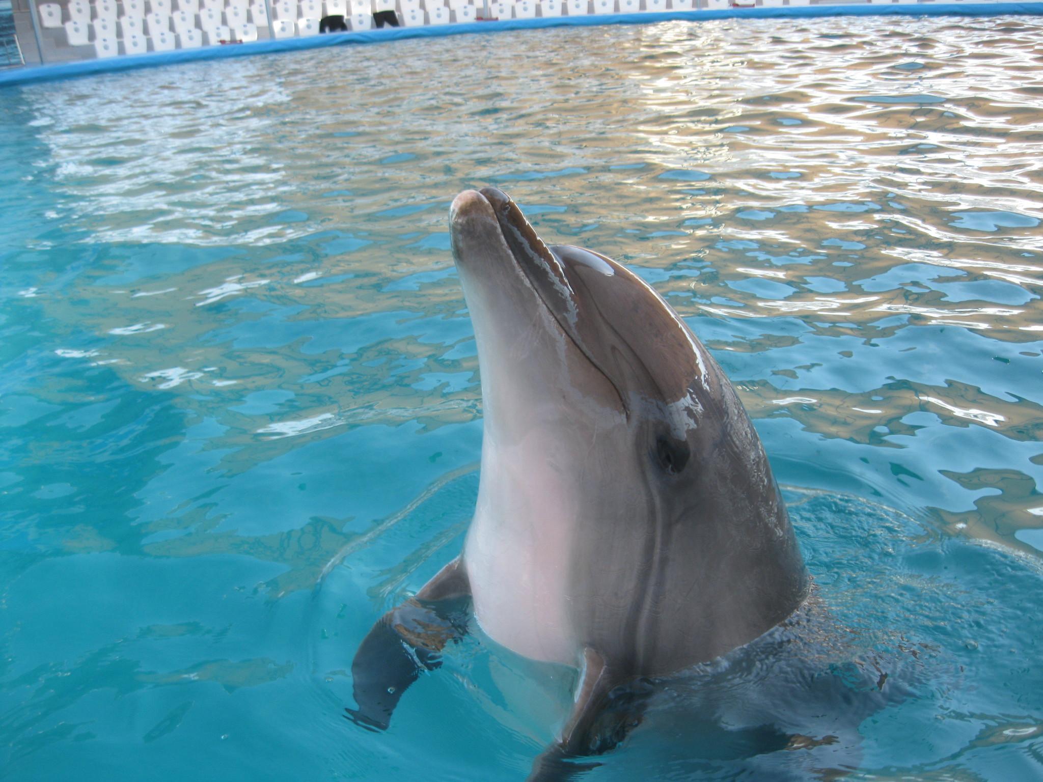 Смешной дельфин картинки, днем рождения для