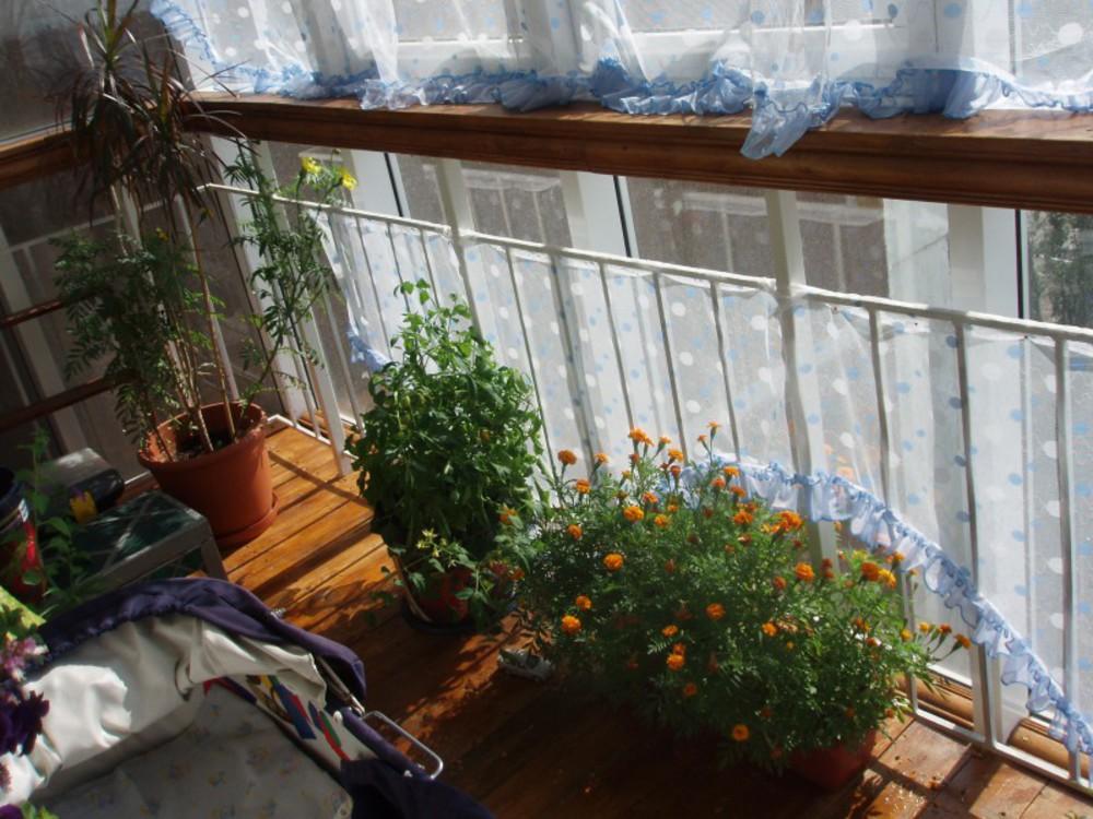 Огород на балконе / форум.