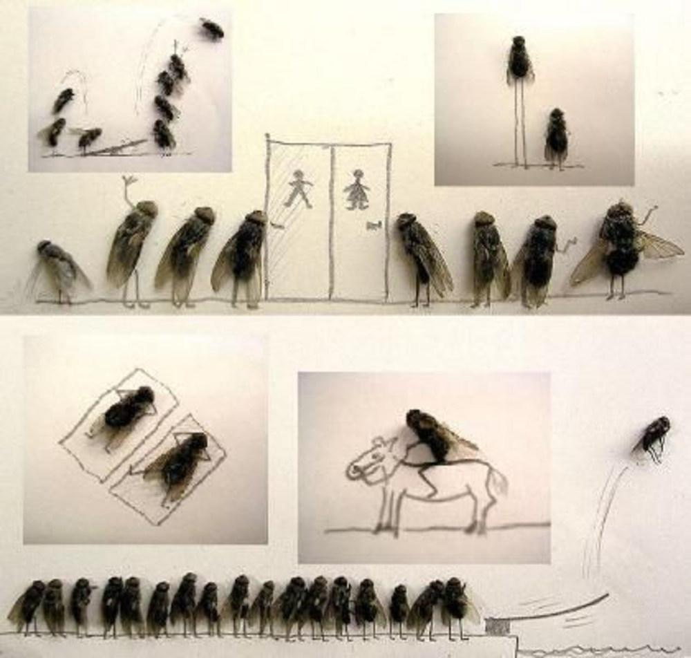 День рождения, картинки с мухами прикольные