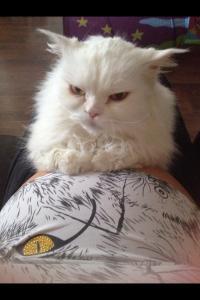 Когда ты беременная почему кот ложится на живот