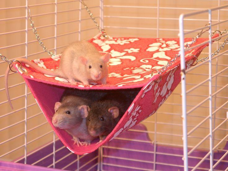 Домики гамаки для крыс своими руками